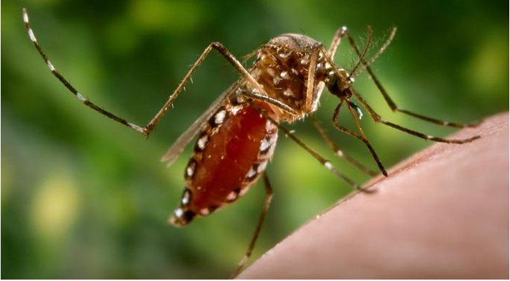 Callous government does nothing to tackle the menace of dengue